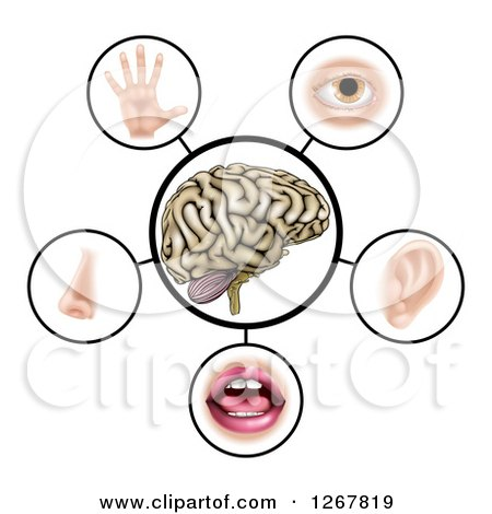 Clipart of a Brain with the Five Senses Around It - Royalty Free Vector Illustration by AtStockIllustration