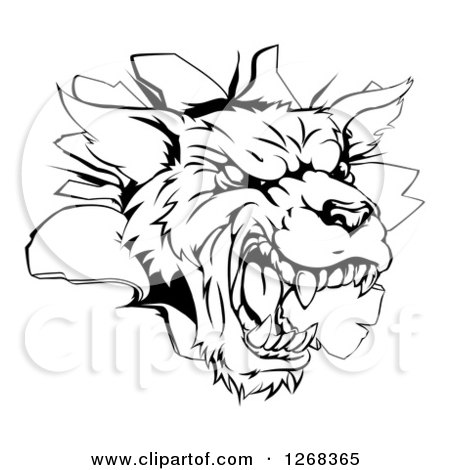 Clipart of a Black and White Wolf Mascot Head Breaking Through a Wall - Royalty Free Vector Illustration by AtStockIllustration