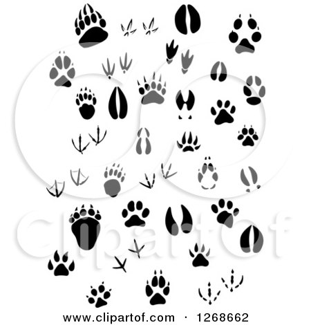 Clipart of Black and White Animal Prints - Royalty Free Vector Illustration by Vector Tradition SM