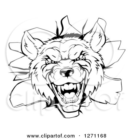 Clipart of a Black and White Vicious Wolf Head Breaking Through a Wall - Royalty Free Vector Illustration by AtStockIllustration