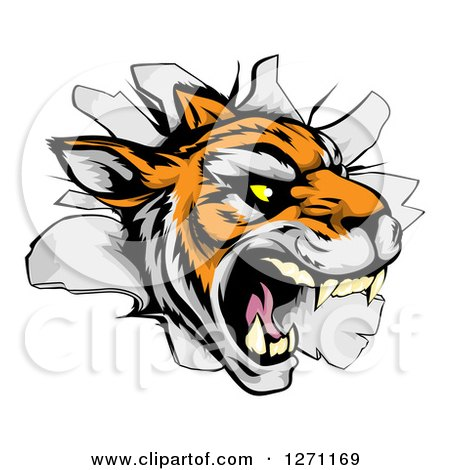 Clipart of a Mad Tiger Mascot Breaking Through a Wall - Royalty Free Vector Illustration by AtStockIllustration