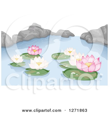 Clipart of Pink and White Lotus Water Lilies and Rocks on a Pond - Royalty Free Vector Illustration by BNP Design Studio