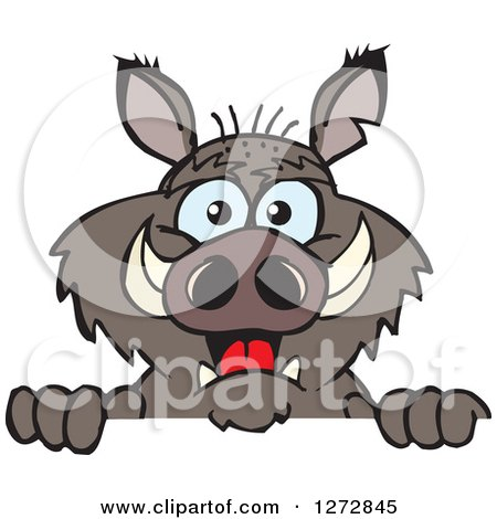 Clipart of a Happy Boar Peeking over a Sign - Royalty Free Vector Illustration by Dennis Holmes Designs