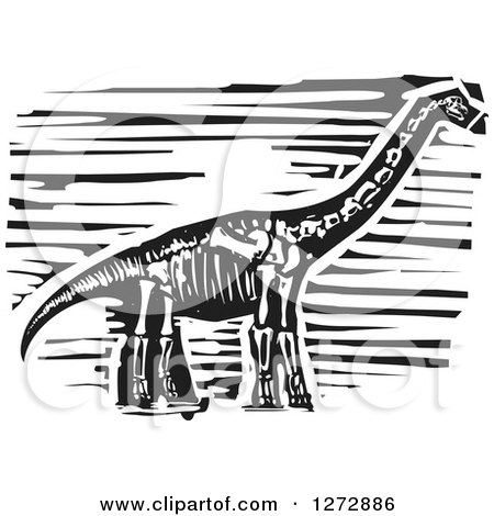 Clipart of a Black and White Woodcut Apatosaurus or Brontosaurus Skeleton - Royalty Free Vector Illustration by xunantunich