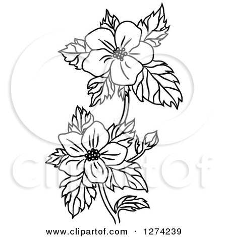 Clipart Of A Black And White Dogwood Flower Stem