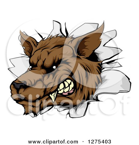 Clipart of a Ferocious Brown Wolf Breaking Through a Wall - Royalty Free Vector Illustration by AtStockIllustration