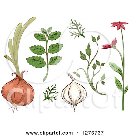 Clipart of Herbal Plants and Roots - Royalty Free Vector Illustration by BNP Design Studio