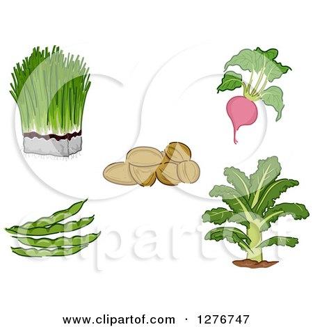 Clipart of Super Food Vegetables - Royalty Free Vector Illustration by BNP Design Studio