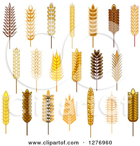 Clipart of Wheat Stalks 2 - Royalty Free Vector Illustration by Vector Tradition SM