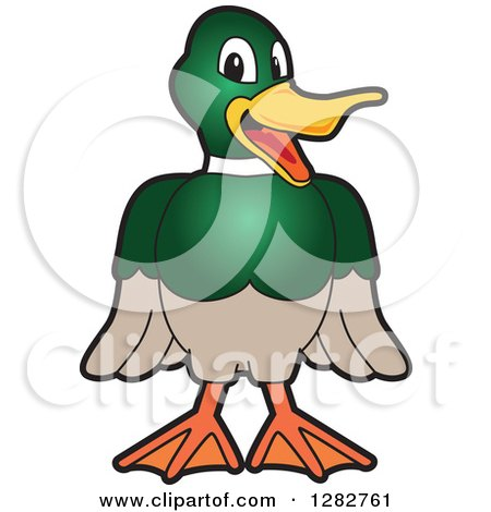 Clipart of a Happy Mallard Duck School Mascot Character Smiling - Royalty Free Vector Illustration by Toons4Biz