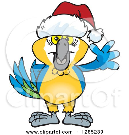 Clipart of a Friendly Waving Blue and Yellow Macaw Wearing a Christmas Santa Hat - Royalty Free Vector Illustration by Dennis Holmes Designs