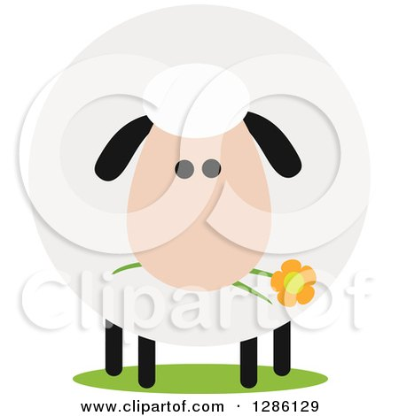 Clipart of a Modern Flat Design Round Fluffy Sheep Eating a Daisy Flower - Royalty Free Vector Illustration by Hit Toon