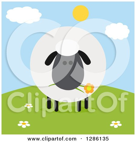 Clipart of a Modern Flat Design Round Fluffy Black Sheep Eating a Flower on a Hill - Royalty Free Vector Illustration by Hit Toon