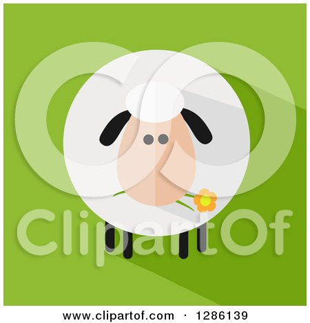 Clipart of a Modern Flat Design Round Fluffy Sheep Eating a Daisy Flower with a Shadow on Green - Royalty Free Vector Illustration by Hit Toon