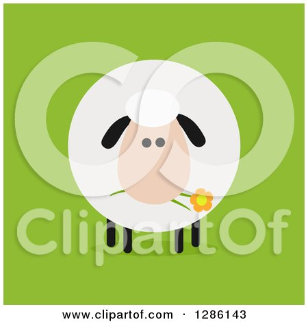 Clipart of a Modern Flat Design Round Fluffy Sheep Eating a Daisy Flower on Green - Royalty Free Vector Illustration by Hit Toon