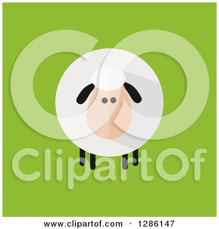 Clipart of a Modern Flat Design Round Fluffy Sheep on Green - Royalty Free Vector Illustration by Hit Toon