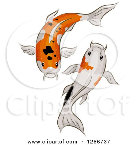 Clipart Of A Pair Of Calico Koi Fish Swimming Royalty Free Vector Illustration