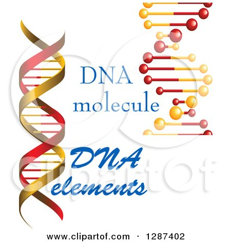 Clipart of Red and Gold Dna Double Helix Cloning Strands and Text - Royalty Free Vector Illustration by Vector Tradition SM