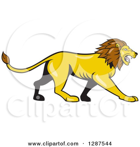 Clipart of a Cartoon Roaring Male Lion Walking in Profile - Royalty Free Vector Illustration by patrimonio