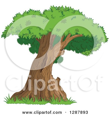 Clipart of a Curved Mature Tree with a Green Canopy - Royalty Free Nature Vector Illustration by Pushkin