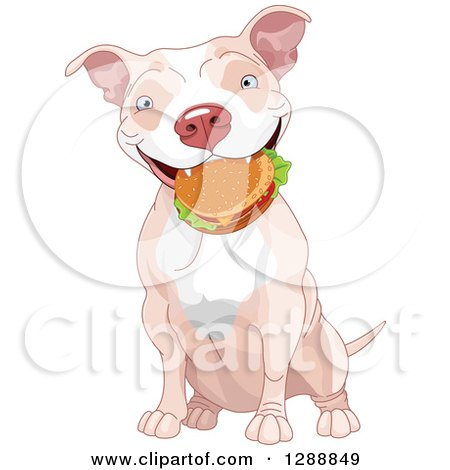 Cute Happy Tan and White Pit Bull Dog Sitting with a Cheeseburger in His Mouth Posters, Art Prints