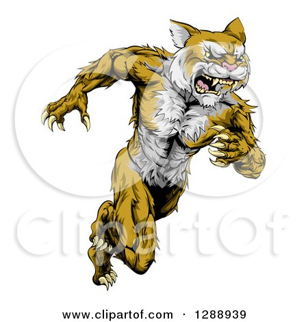 Clipart of an Aggressive Muscular Wildcat Man Sprinting - Royalty Free Vector Illustration by AtStockIllustration