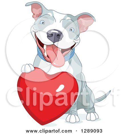 Animal Clipart of a Cute Happy Gray and White Pit Bull Dog Resting a Paw on a Red Love Heart - Royalty Free Vector Illustration by Pushkin