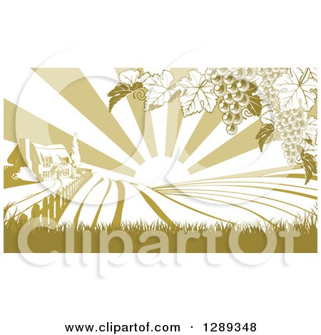 Clipart of a Farm House and Rolling Hills with Winery Grape Vines and Sun Rays in Green and White - Royalty Free Vector Illustration by AtStockIllustration