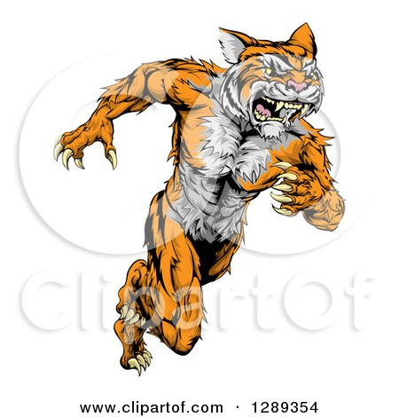 Clipart of a Fierce Muscular Running Tiger Man Mascot - Royalty Free Vector Illustration by AtStockIllustration