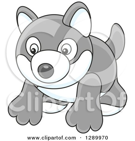 Clipart of a Gray and White Toy Husky Dog - Royalty Free Vector Illustration by Alex Bannykh