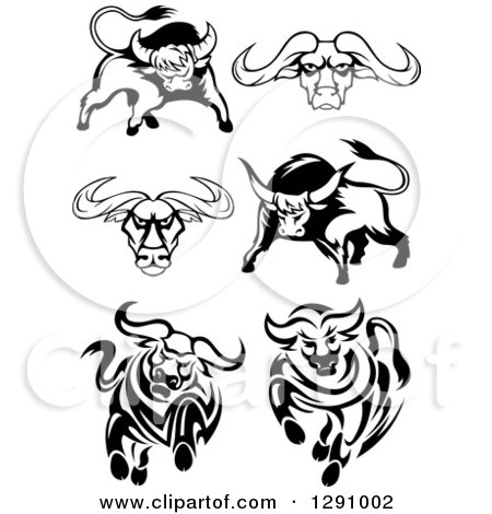Clipart of Black and White Longhorn Bulls - Royalty Free Vector Illustration by Vector Tradition SM