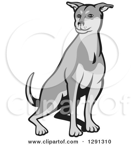 Clipart of a Cartoon Grayscale Husky Shar Pei Mix Breed Dog Sitting - Royalty Free Vector Illustration by patrimonio