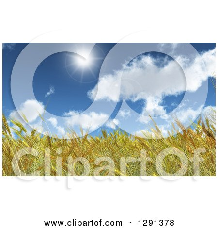 Clipart of a Background of 3d Golden Wheat in a Field Under a Blue Sunny Sky - Royalty Free Illustration by KJ Pargeter