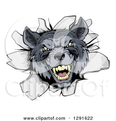 Clipart of a Vicious Gray Wolf Breaking Through a Wall - Royalty Free Vector Illustration by AtStockIllustration
