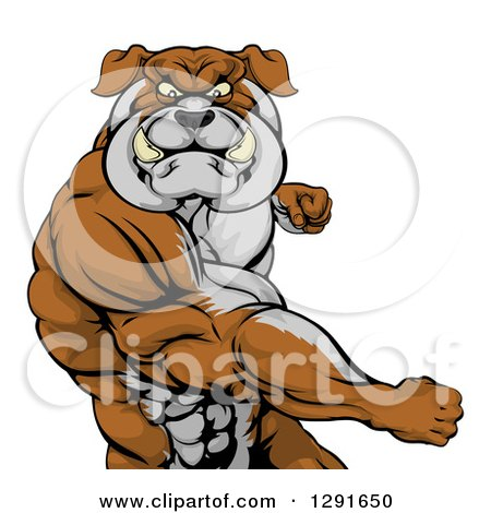 Clipart of a Vicious Muscular Bulldog Man Punching - Royalty Free Vector Illustration by AtStockIllustration