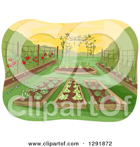 Clipart of a Garden of Raised Beds with Vegetables - Royalty Free Vector Illustration by BNP Design Studio