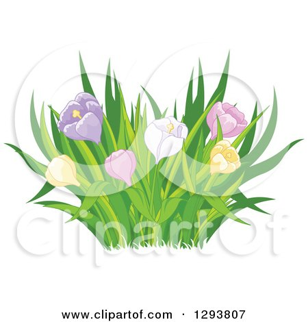 Clipart of Grasses and Colorful Spring Tulip or Crocus Flowers - Royalty Free Vector Illustration by Pushkin