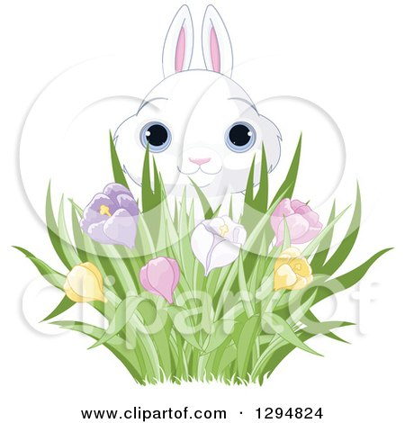 Clipart of a Cute White Easter Bunny Looking over Spring Crocus Flowers - Royalty Free Vector Illustration by Pushkin