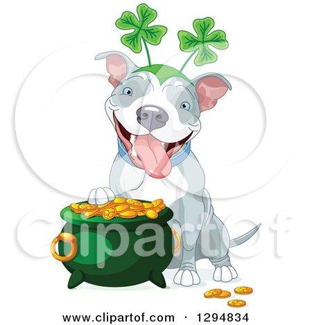 Cute White and Gray Pitbull St Patricks Day Dog Wearing a Shamrock Headband by a Pot of Gold Posters, Art Prints
