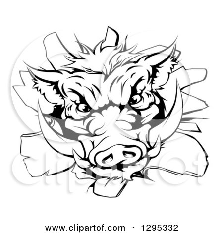 Clipart of a Black and White Fierce Boar Head Breaking Through a Wall - Royalty Free Vector Illustration by AtStockIllustration