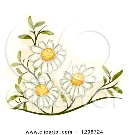 Clipart of Medicinal Chamomile Flowers - Royalty Free Vector Illustration by BNP Design Studio