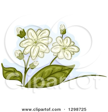 Clipart of Jasmine Flowers and Leaves - Royalty Free Vector Illustration by BNP Design Studio
