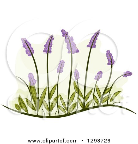 Clipart of Lavender Flowers and Leaves - Royalty Free Vector Illustration by BNP Design Studio