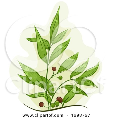 Clipart of a Tea Tree Plant with Fruits - Royalty Free Vector Illustration by BNP Design Studio