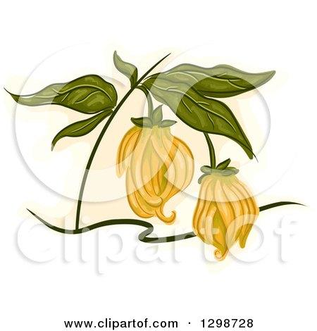 Clipart of a Ylang Ylang Plant - Royalty Free Vector Illustration by BNP Design Studio