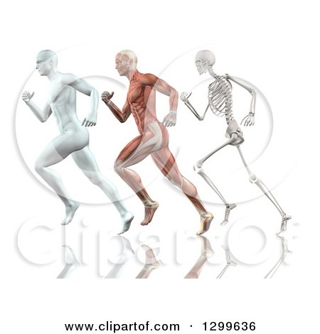 Clipart of a 3d Anatomical White Man, Muscle Man and Skeleton Running on White - Royalty Free Illustration by KJ Pargeter