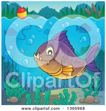 Clipart of a Purple and Orange Carnivorous Piranha Fish Underwater, with a Fishing Hook and Visible Surface - Royalty Free Vector Illustration by visekart