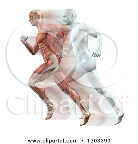 3d Anatomical Muscle and White Men Running on White Posters, Art Prints