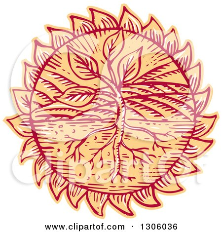 Clipart of a Sketched or Engraved Plant in a Field with Roots in a Flower Head or Sun - Royalty Free Vector Illustration by patrimonio