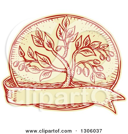 Clipart of a Sketched or Engraved Olive Tree in an Oval over a Blank Ribbon - Royalty Free Vector Illustration by patrimonio